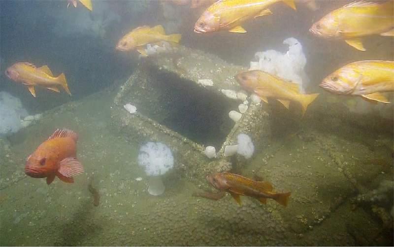 The SS Dorothy Wintermote's engine skylight. Ocean Exploration Trust - NOAA